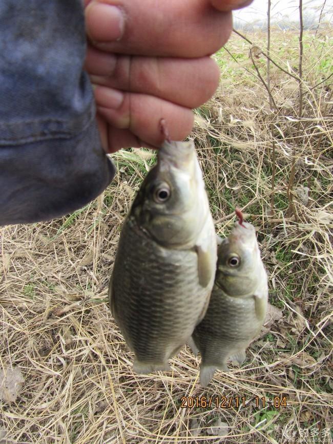 跟着同伴享渔乐——冬季野钓