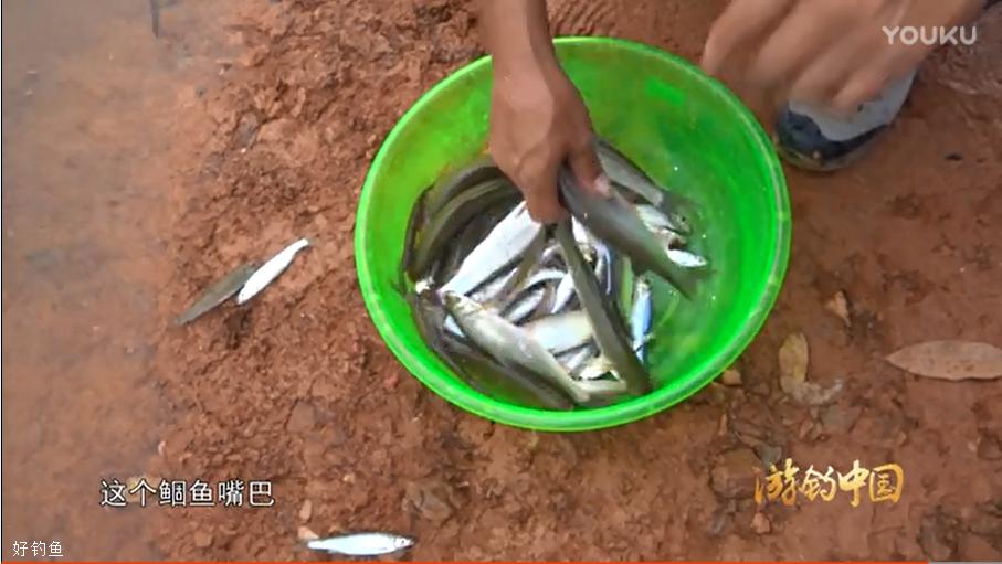 【游钓中国】第二季第38集 大港桥短竿细线垂钓特色鱼种