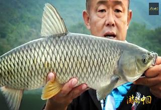 【游钓中国】第二季第44集 岸钓再战棉花滩 巧避杂鱼直击底物