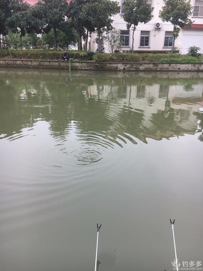 """【征贴赛第十七期】大鲤和小鲤,一起闹""""鲫""""窝!"""