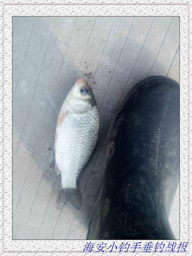 【第十八期征帖赛】揭密传统野钓寻鱼的秘密,爆战江湖(二)