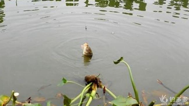 【渔忆户外 兄弟战队】【我的钓鱼故事】之: 洞里的那些事儿