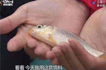 【江湖行】第264集 惠州踏春爆钓鲮