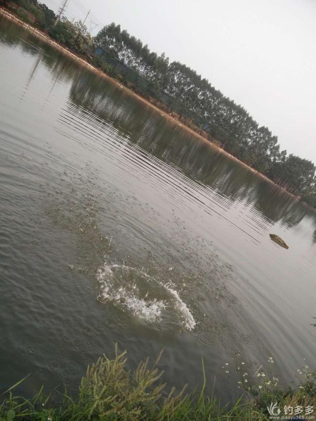 钓鱼岛上擒野狗……