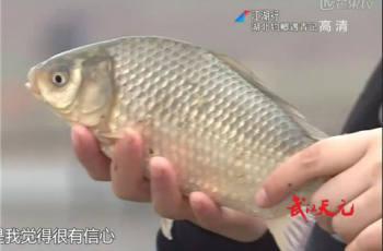 【江湖行】第266集 湖北钓鲫遇青记 走进武汉