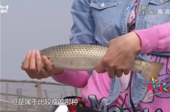 【江湖行】第270集 慈溪觅鲻鱼 青瓷世界人工河道