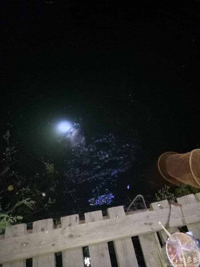 【征帖赛第21期】长安夜行--终获大鲤
