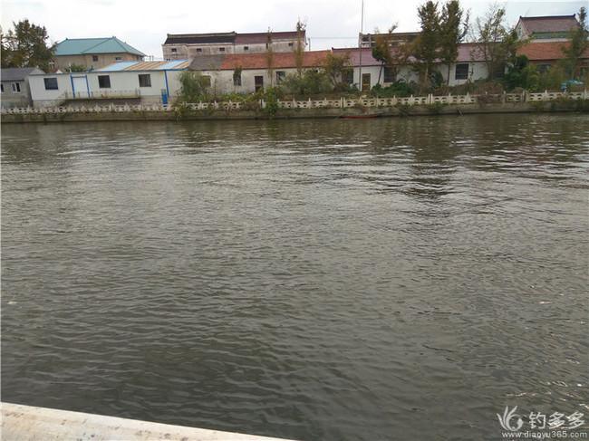 栟茶运河——野钓的乐园