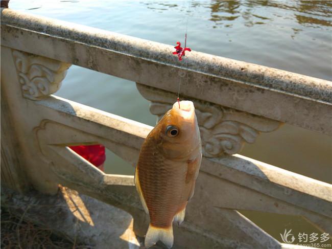 初试一支独秀   小钓栟茶运河