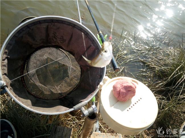 上午采蘑菇,下午钓鱼乐