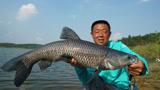 【游钓中国】第30集 放竿枣阳鳊鱼连竿 华阳河畔底物难寻