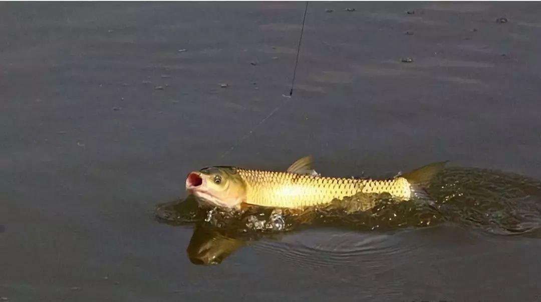 新手必看!懂得观漂,才能上鱼!