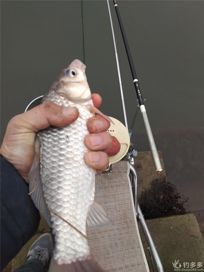 钓鱼日记-1.30茅山