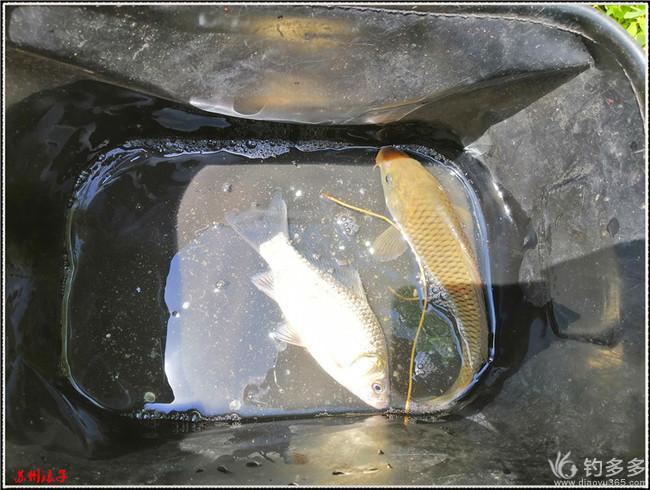 鱼虾很少,活动很多的三号
