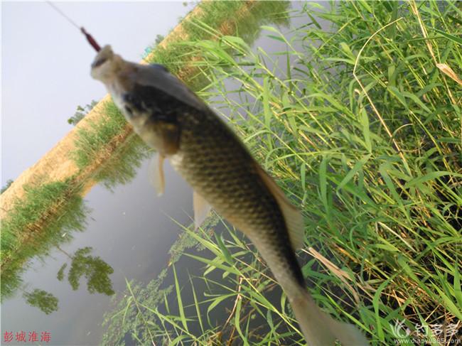 有鱼可钓就快乐!