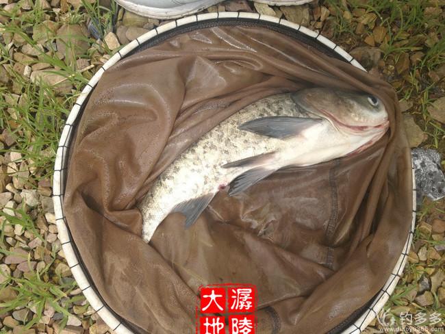 【原创】过了遛鱼瘾 开了钓鱼心