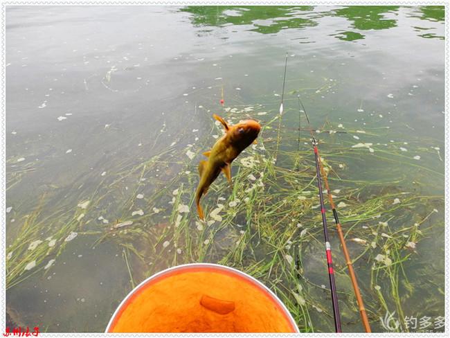 多了两种鱼少了两条鱼