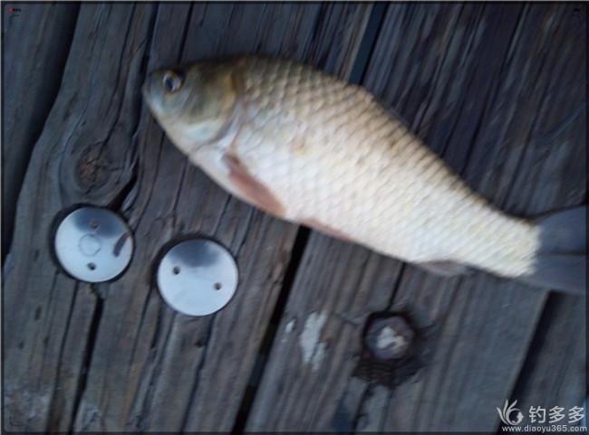 小河沟里的渔乐