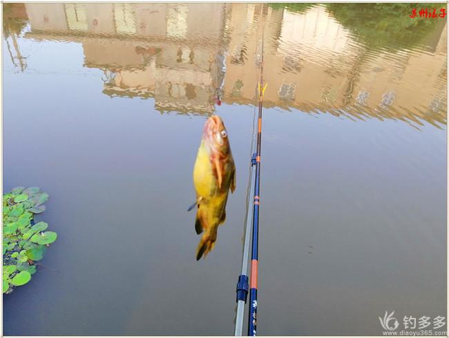 精心准备无鱼来,楼下杆尖得一碗