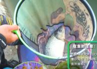 《钓鱼公开课》第87期丨取鱼摘钩技巧