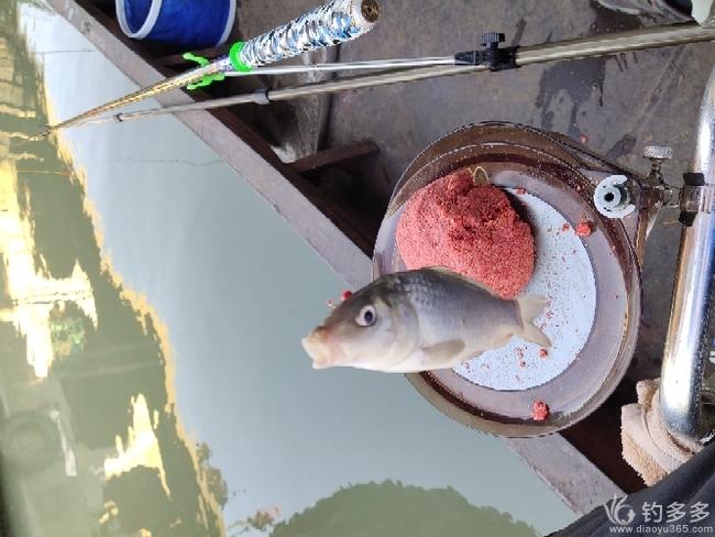 微山湖野钓鲫鱼