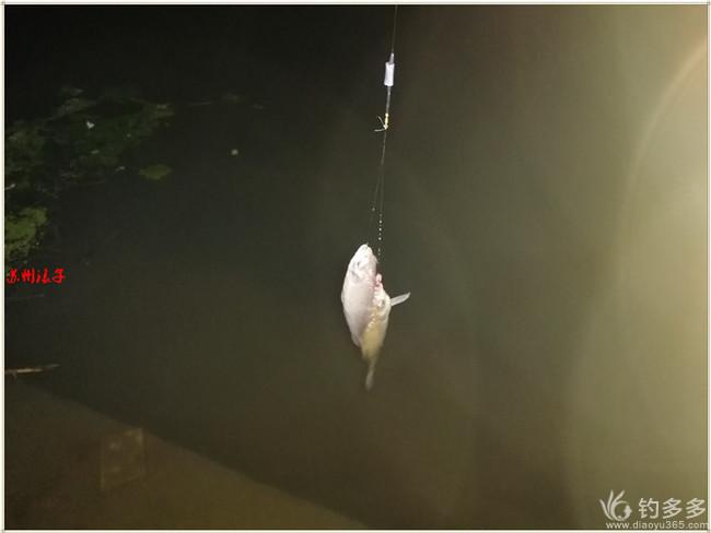 十月围城  鱼门紧闭