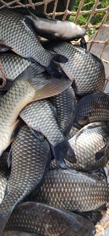 棠梨坡辉煌鱼庄
