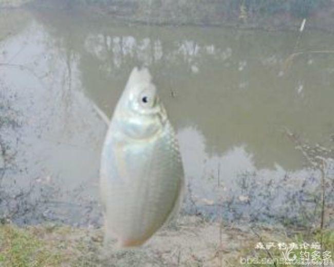 【原创】荒塘继续玩半天      鱼获靓靓快乐还