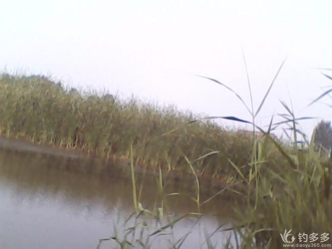 【原创】野钓纪事 61 野河岸边的小暑第三钓 20190715