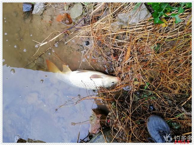 隔天抢鱼,四条四品种