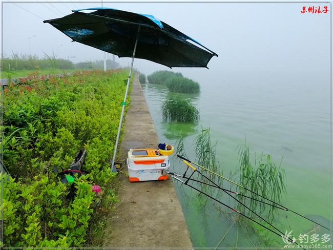 太湖涨水鱼情变,一条板鲫撑颜面