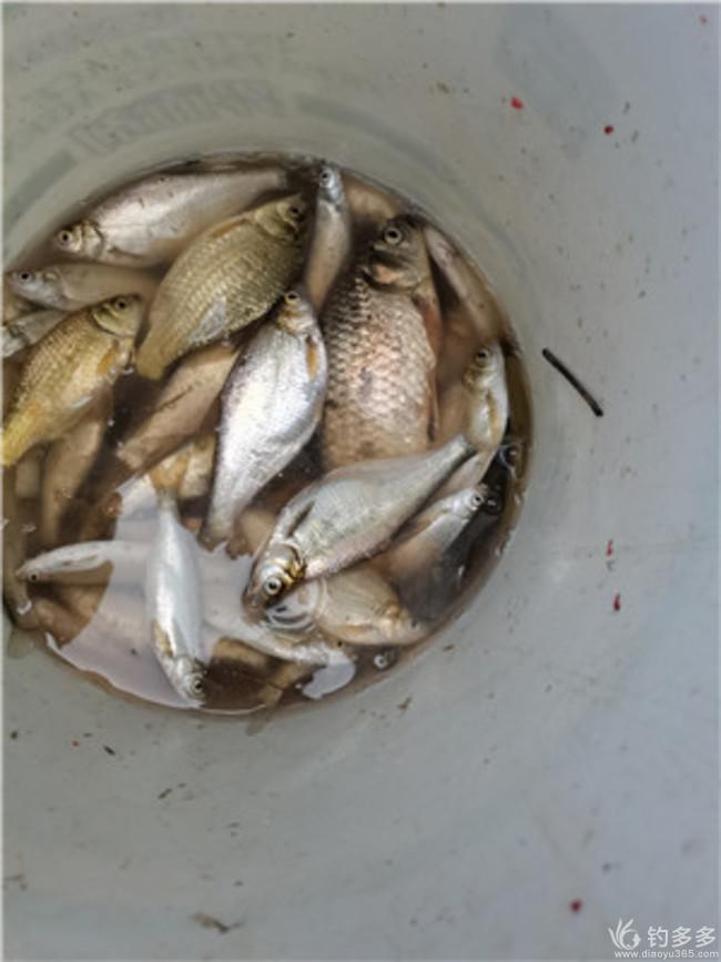 【原创】 5月9日钓鱼报告